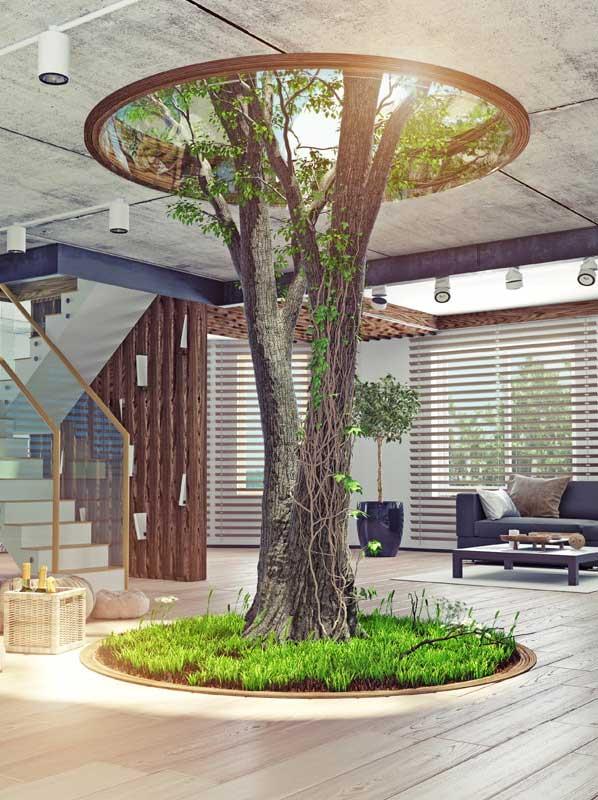 interior tree garden with roof skylight
